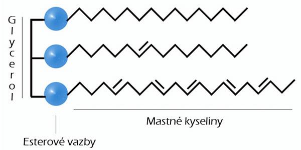 Triacylglycerol tuky