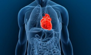 srdeční choroby maso